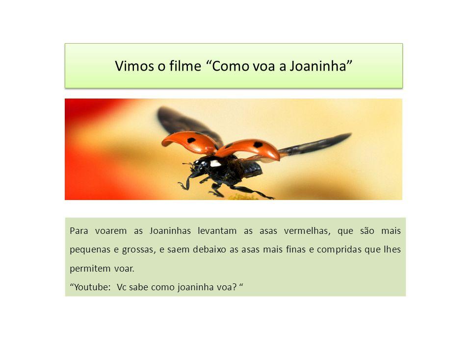 Vimos o filme Como voa a Joaninha