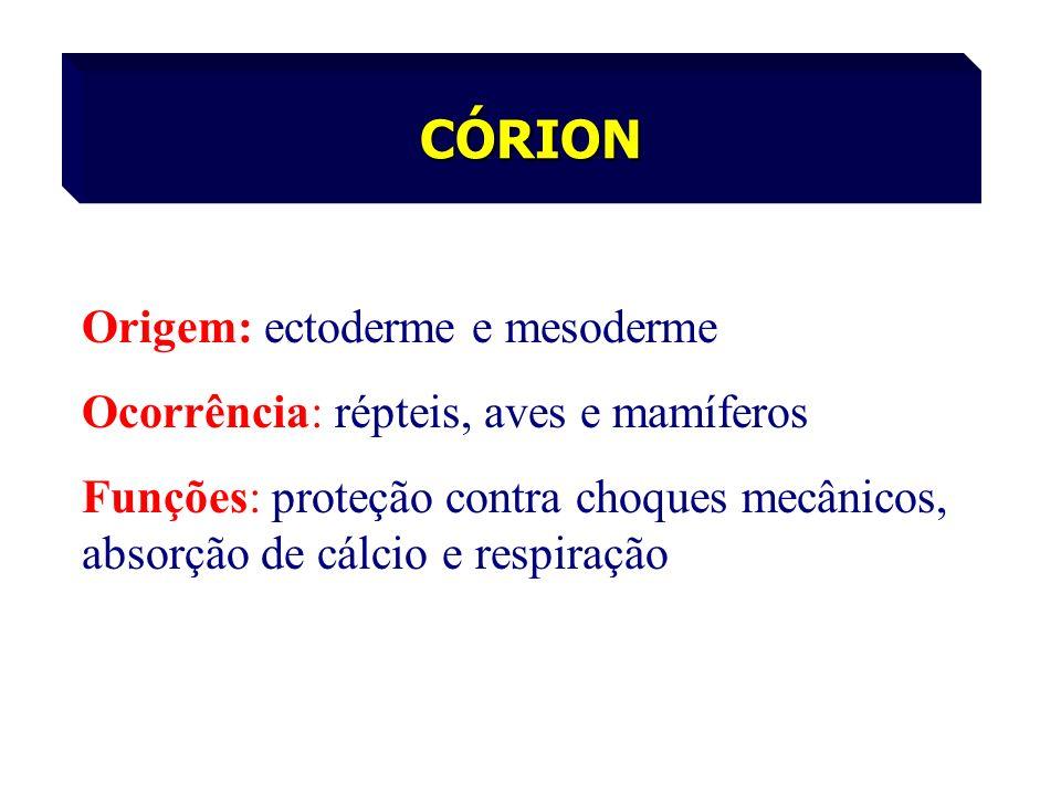 CÓRION Origem: ectoderme e mesoderme