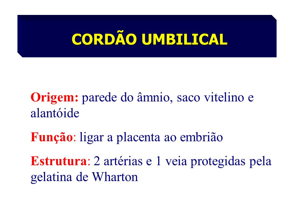 CORDÃO UMBILICAL Origem: parede do âmnio, saco vitelino e alantóide
