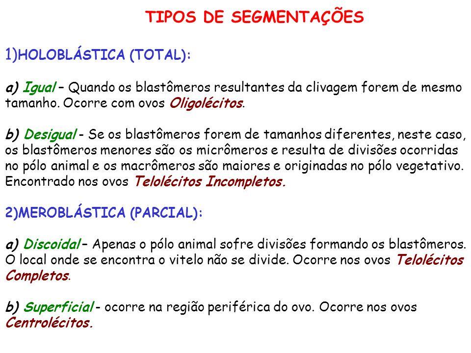 TIPOS DE SEGMENTAÇÕES 1)HOLOBLÁSTICA (TOTAL): a) Igual – Quando os blastômeros resultantes da clivagem forem de mesmo tamanho.