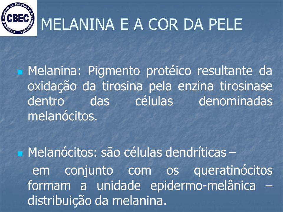 MELANINA E A COR DA PELE
