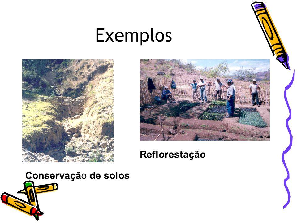 Exemplos Reflorestação Conservação de solos