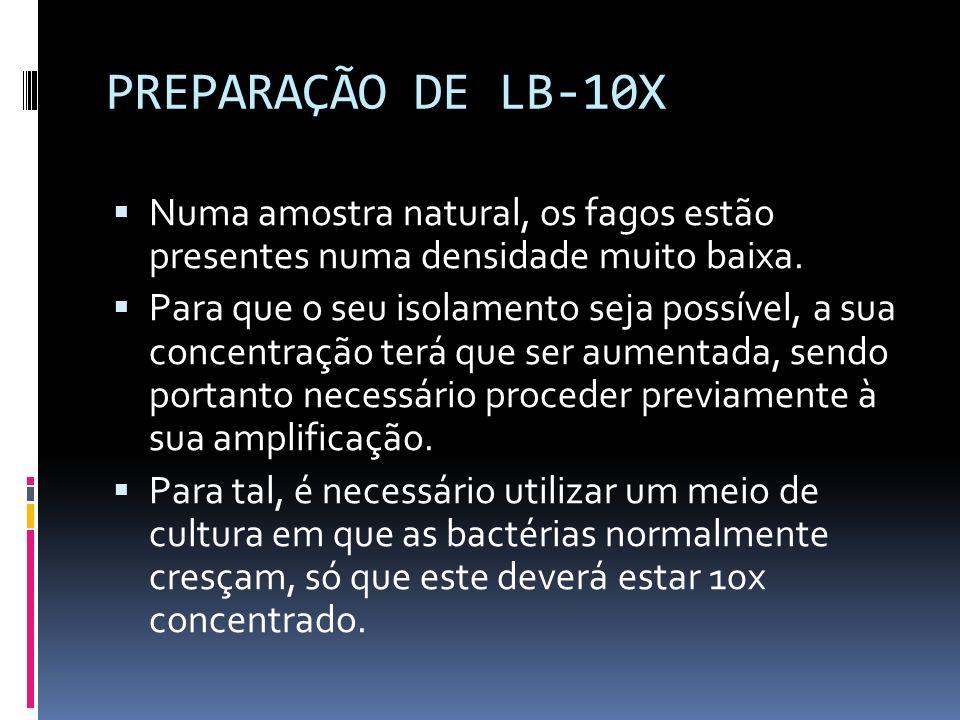 PREPARAÇÃO DE LB-10X Numa amostra natural, os fagos estão presentes numa densidade muito baixa.