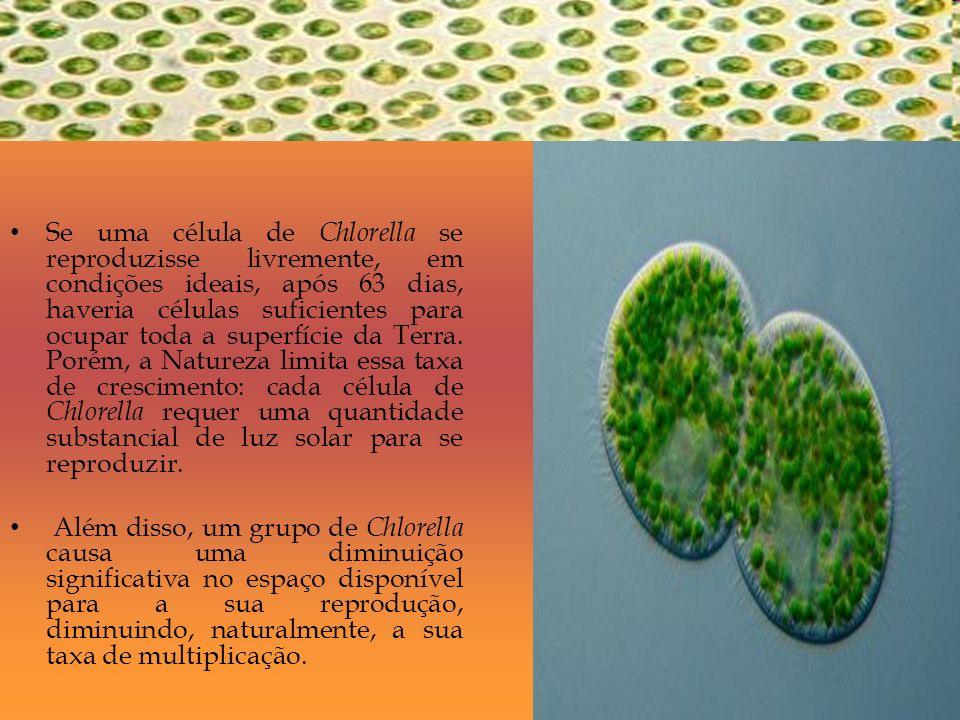 Se uma célula de Chlorella se reproduzisse livremente, em condições ideais, após 63 dias, haveria células suficientes para ocupar toda a superfície da Terra. Porém, a Natureza limita essa taxa de crescimento: cada célula de Chlorella requer uma quantidade substancial de luz solar para se reproduzir.
