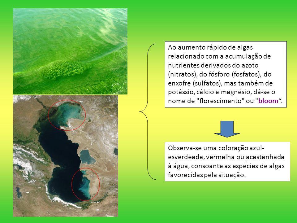 Ao aumento rápido de algas relacionado com a acumulação de nutrientes derivados do azoto (nitratos), do fósforo (fosfatos), do enxofre (sulfatos), mas também de potássio, cálcio e magnésio, dá-se o nome de florescimento ou bloom .