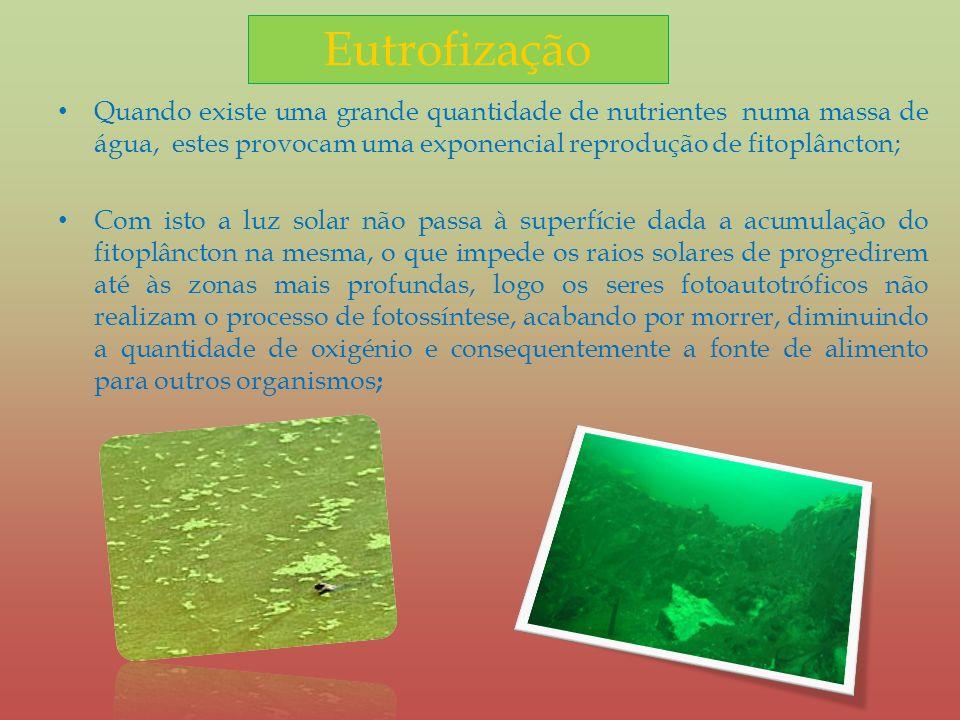 Eutrofização Quando existe uma grande quantidade de nutrientes numa massa de água, estes provocam uma exponencial reprodução de fitoplâncton;