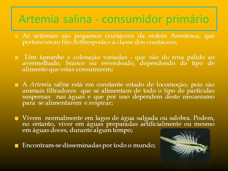 Artemia salina - consumidor primário