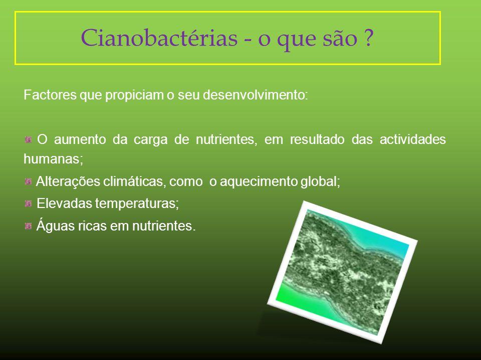 Cianobactérias - o que são
