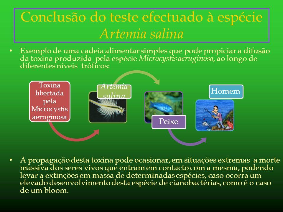 Conclusão do teste efectuado à espécie Artemia salina