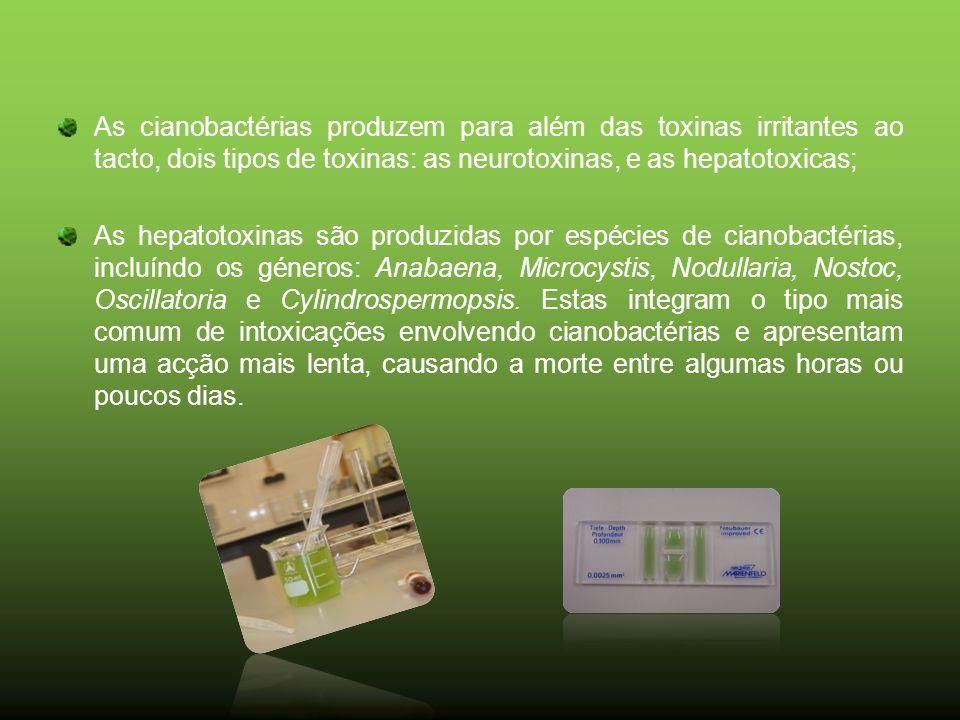 As cianobactérias produzem para além das toxinas irritantes ao tacto, dois tipos de toxinas: as neurotoxinas, e as hepatotoxicas;