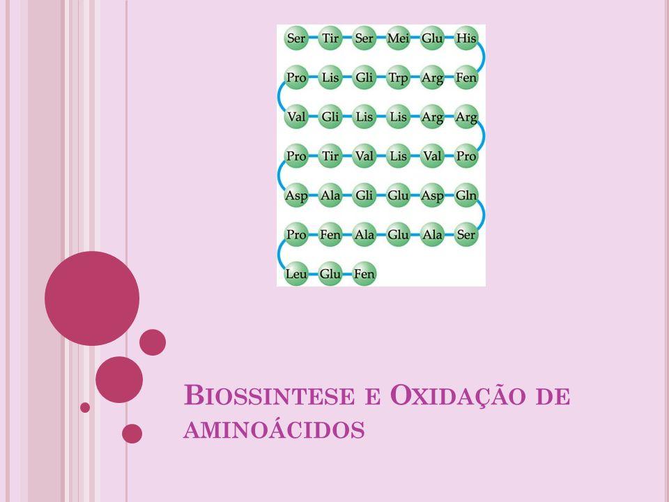 Biossintese e Oxidação de aminoácidos