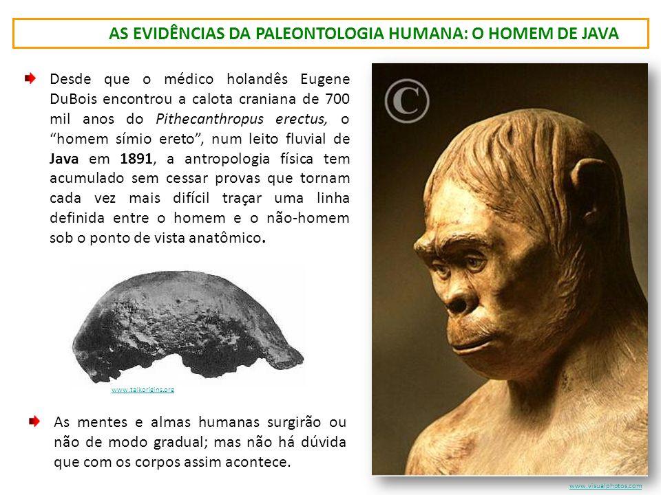 as evidências da paleontologia humana: o homem de java