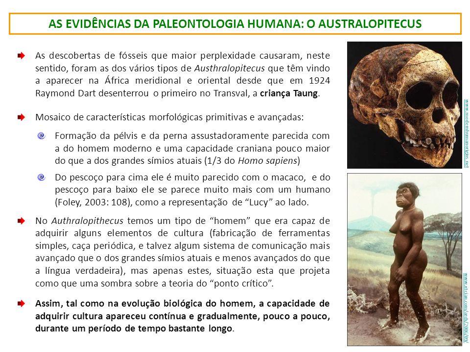 as evidências da paleontologia humana: o australopitecus