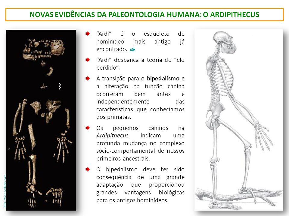 novas evidências da paleontologia humana: o ardipitHecus