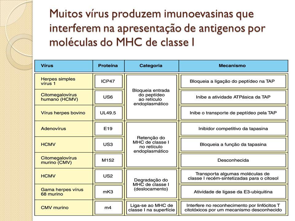 Muitos vírus produzem imunoevasinas que interferem na apresentação de antigenos por moléculas do MHC de classe I