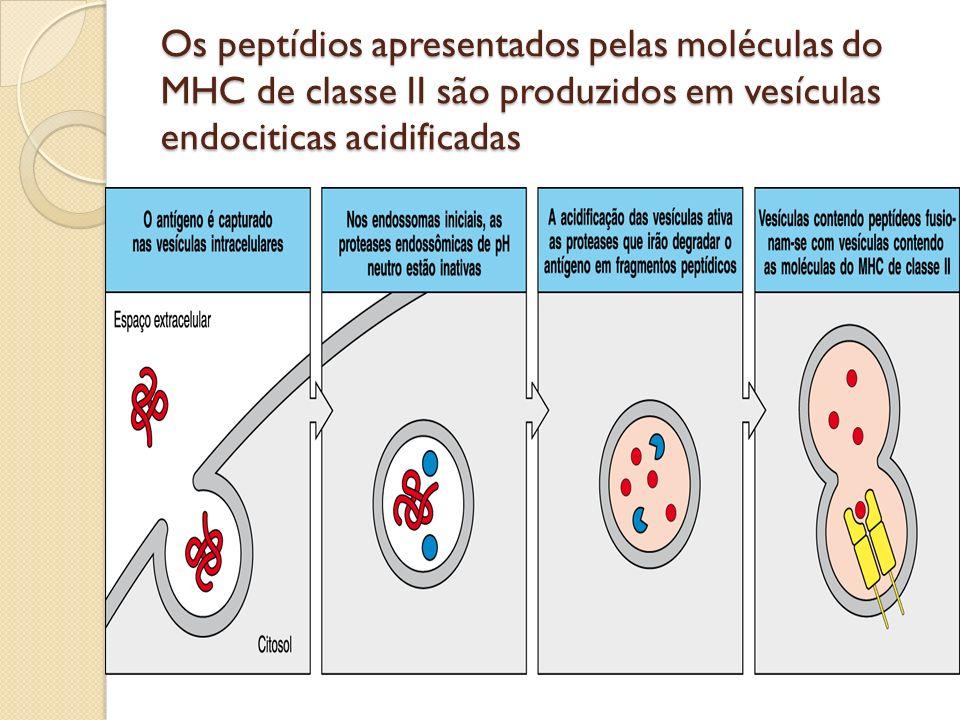 Os peptídios apresentados pelas moléculas do MHC de classe II são produzidos em vesículas endociticas acidificadas
