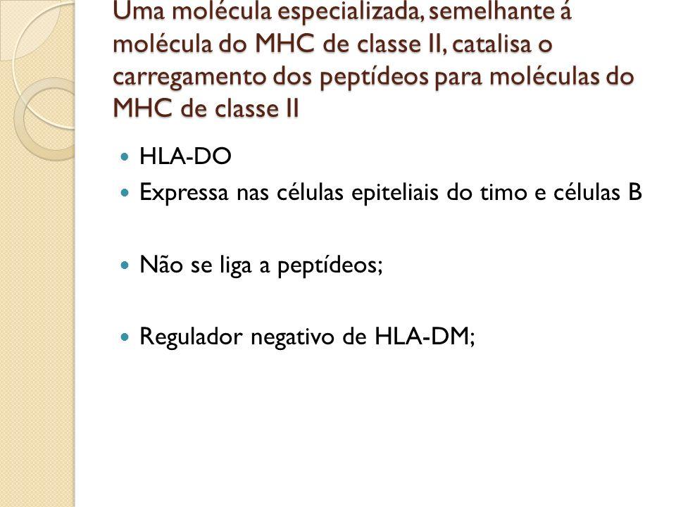 Uma molécula especializada, semelhante á molécula do MHC de classe II, catalisa o carregamento dos peptídeos para moléculas do MHC de classe II