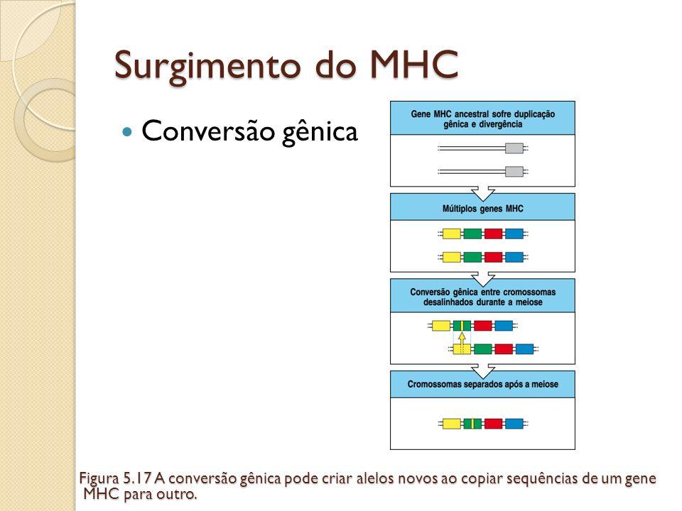 Surgimento do MHC Conversão gênica