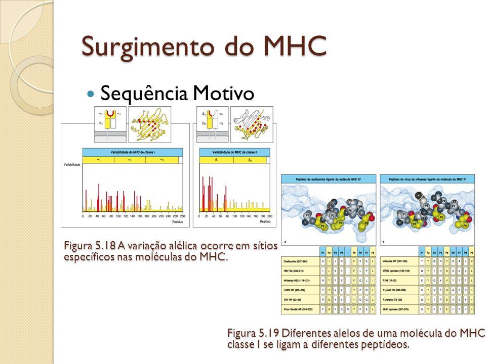 Surgimento do MHC Sequência Motivo