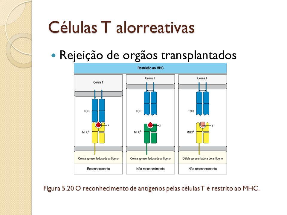 Células T alorreativas