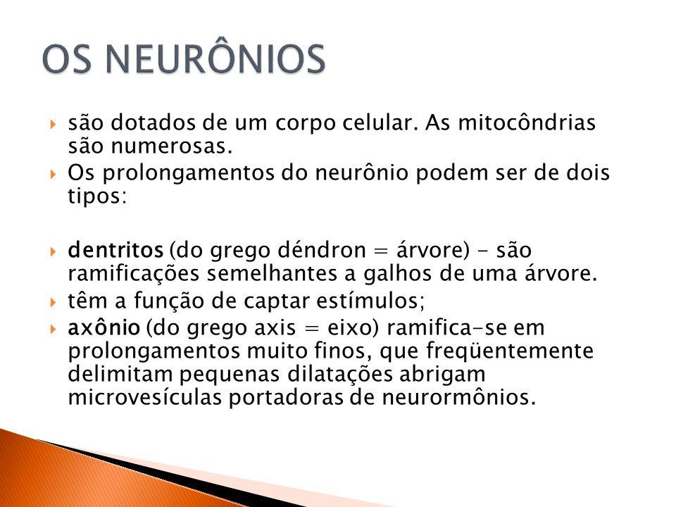 OS NEURÔNIOS são dotados de um corpo celular. As mitocôndrias são numerosas. Os prolongamentos do neurônio podem ser de dois tipos: