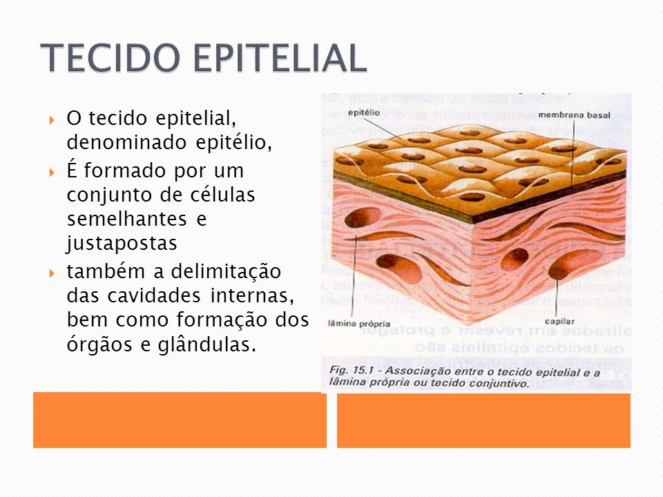 TECIDO EPITELIAL O tecido epitelial, denominado epitélio,