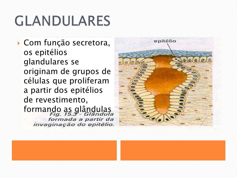GLANDULARES