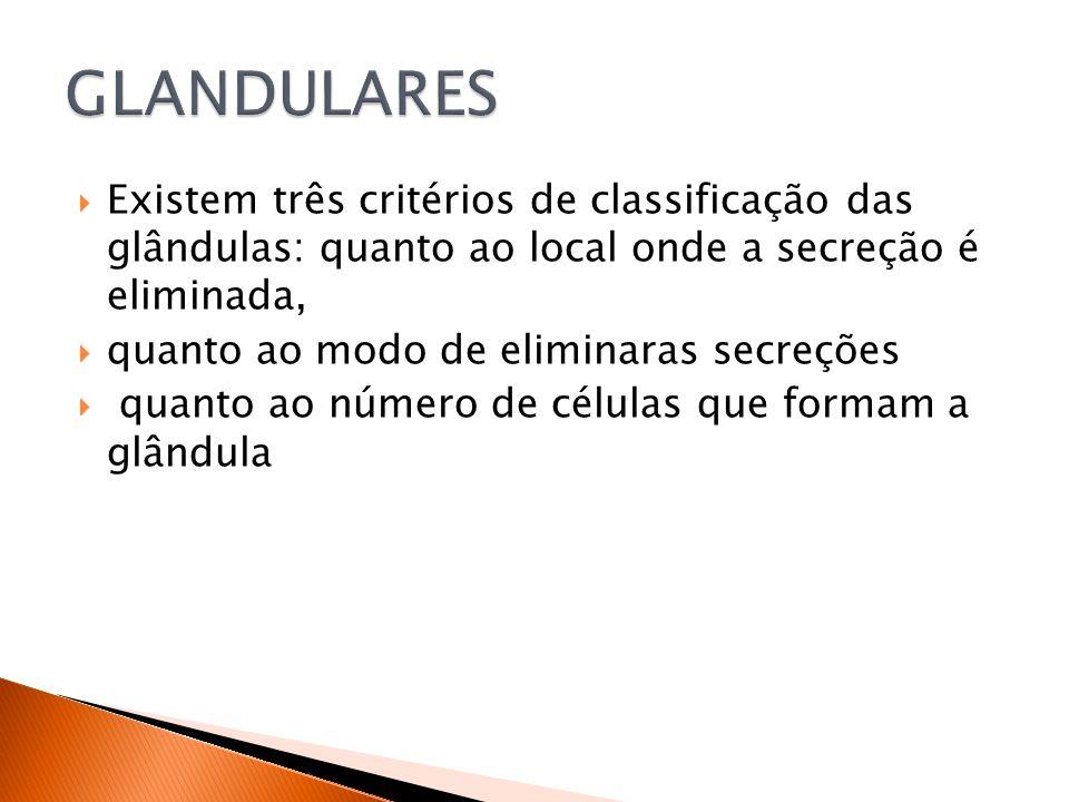 GLANDULARES Existem três critérios de classificação das glândulas: quanto ao local onde a secreção é eliminada,