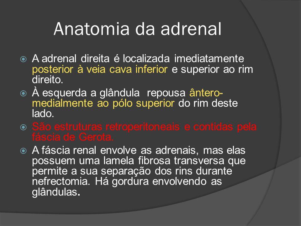 Anatomia da adrenal A adrenal direita é localizada imediatamente posterior à veia cava inferior e superior ao rim direito.