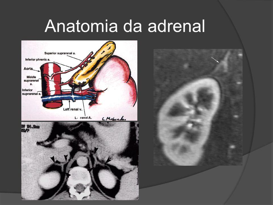 Anatomia da adrenal