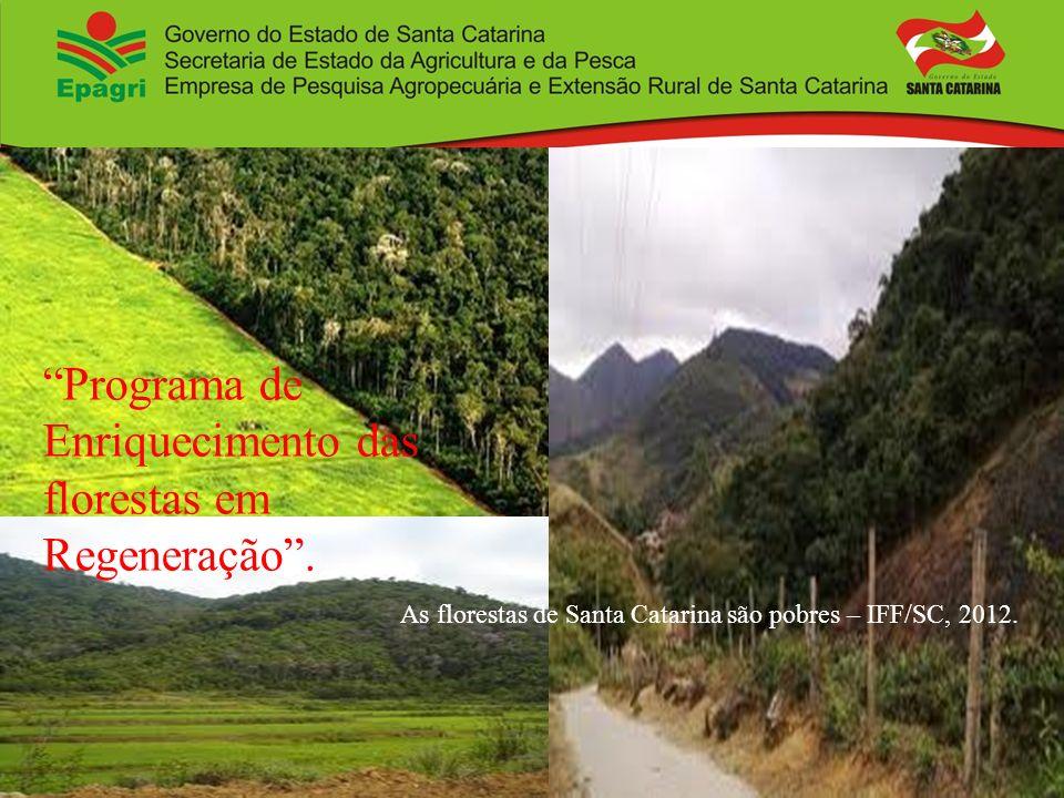 Programa de Enriquecimento das florestas em Regeneração .