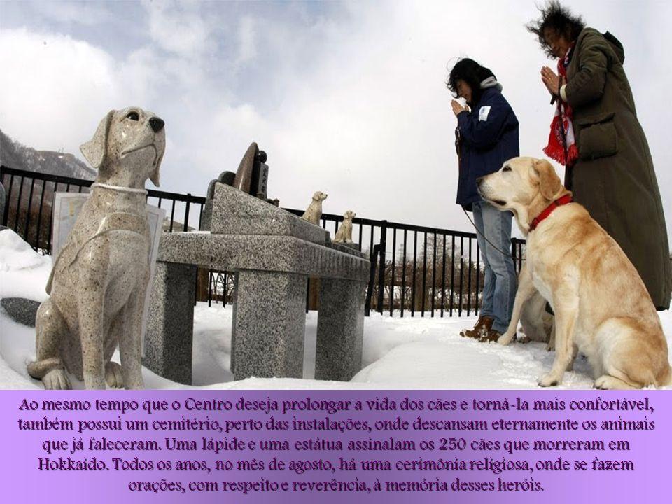 Ao mesmo tempo que o Centro deseja prolongar a vida dos cães e torná-la mais confortável, também possui um cemitério, perto das instalações, onde descansam eternamente os animais que já faleceram.