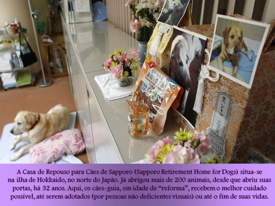 A Casa de Repouso para Cães de Sapporo (Sapporo Retirement Home for Dogs) situa-se