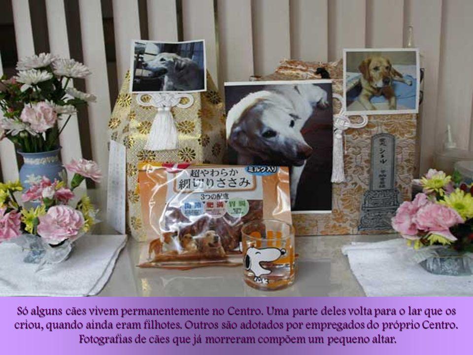 Fotografias de cães que já morreram compõem um pequeno altar.