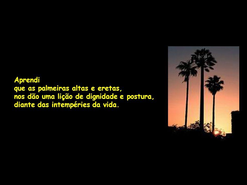 Aprendi que as palmeiras altas e eretas, nos dão uma lição de dignidade e postura, diante das intempéries da vida.