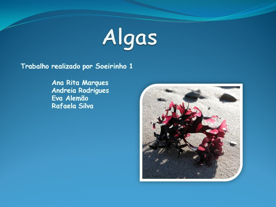 Algas Trabalho realizado por Soeirinho 1 Ana Rita Marques