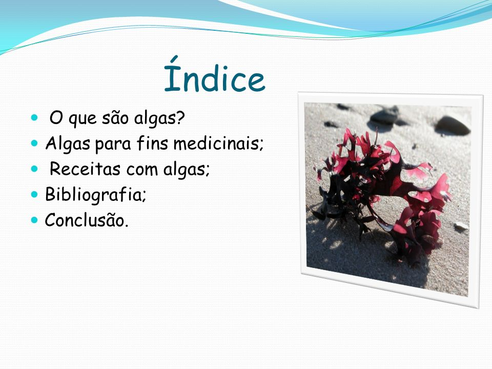 Índice O que são algas Algas para fins medicinais;