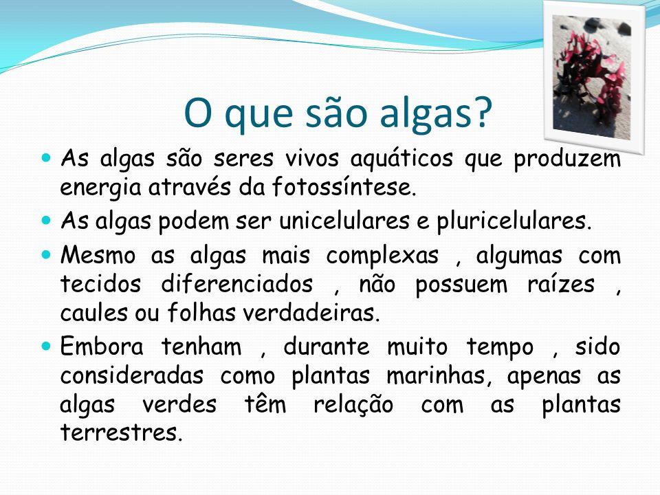 O que são algas As algas são seres vivos aquáticos que produzem energia através da fotossíntese. As algas podem ser unicelulares e pluricelulares.