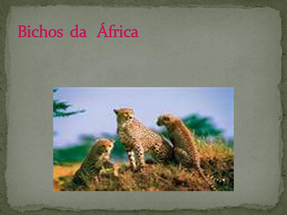 Bichos da África