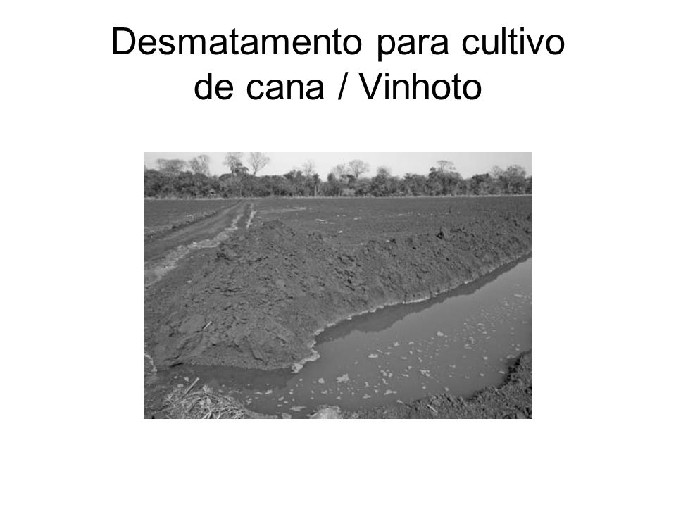Desmatamento para cultivo de cana / Vinhoto