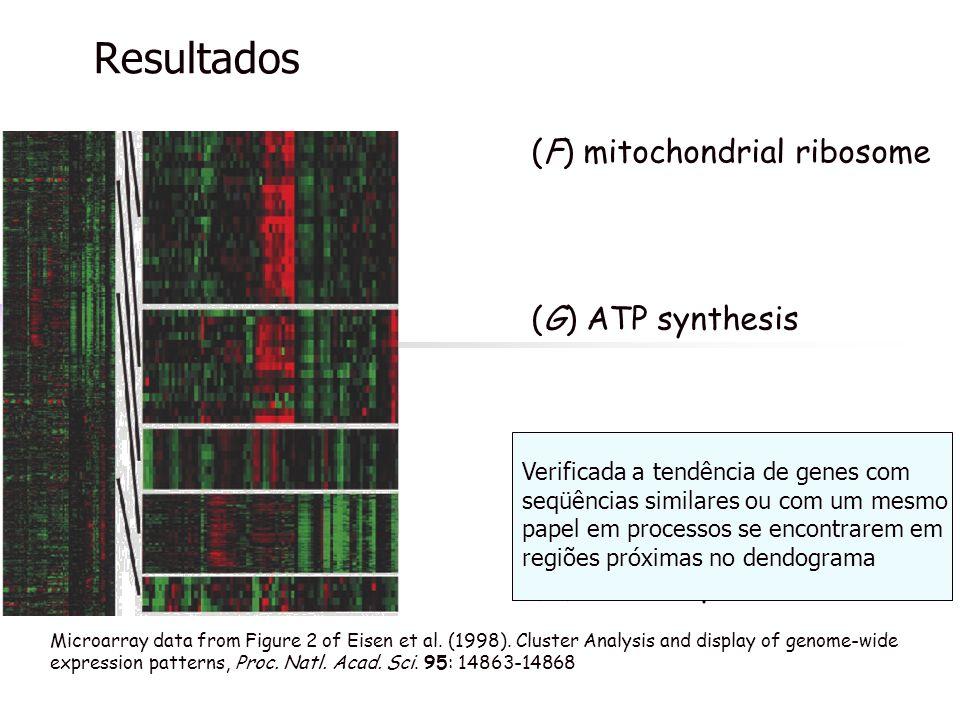 Resultados (F) mitochondrial ribosome (G) ATP synthesis