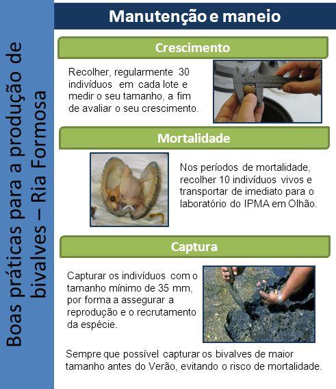 Boas práticas para a produção de bivalves – Ria Formosa