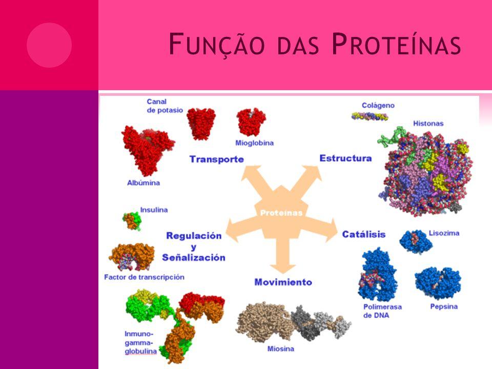 Função das Proteínas