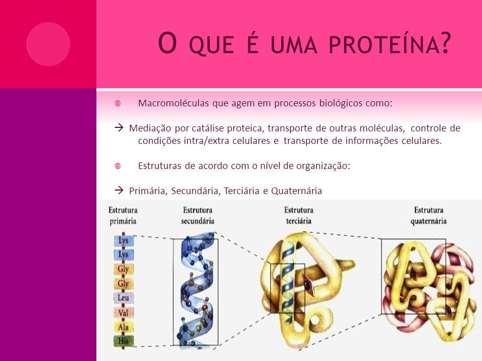 O que é uma proteína Macromoléculas que agem em processos biológicos como: