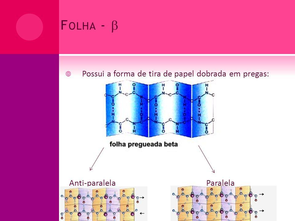Folha -  Possui a forma de tira de papel dobrada em pregas: