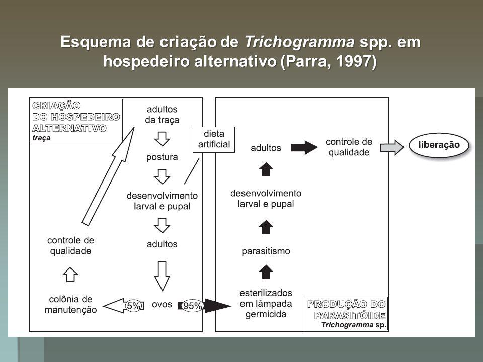 Esquema de criação de Trichogramma spp