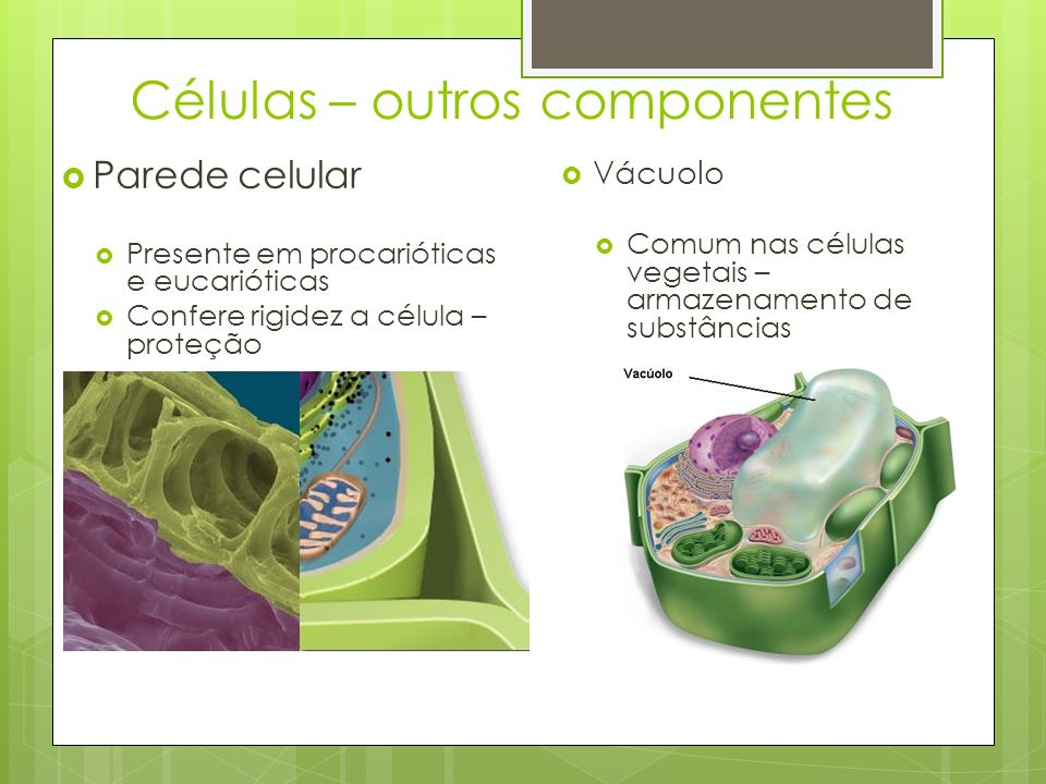 Células – outros componentes