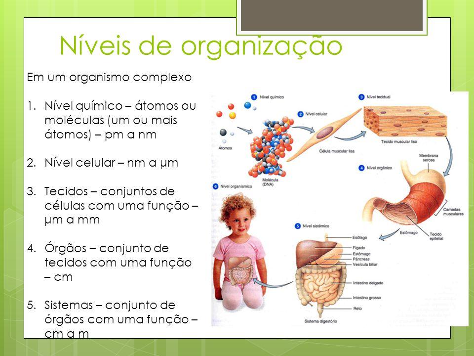 Níveis de organização Em um organismo complexo