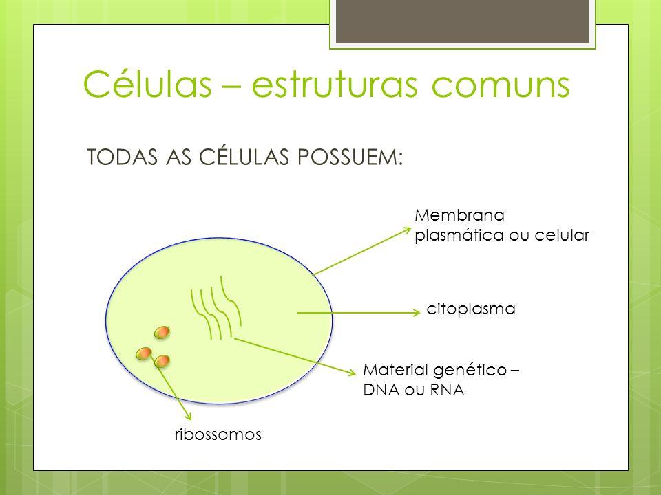 Células – estruturas comuns