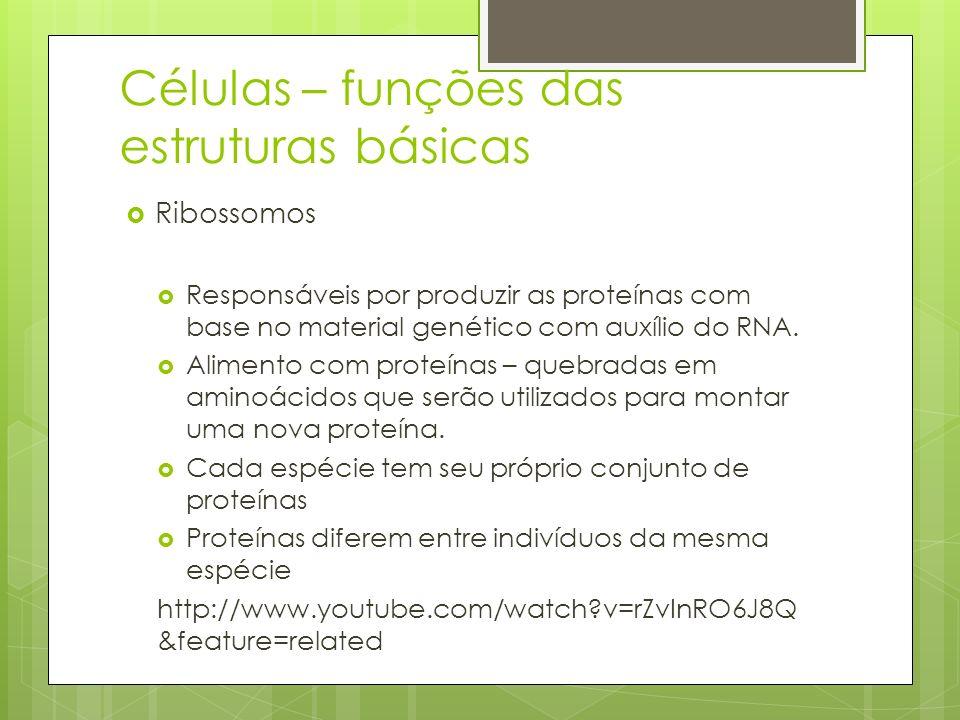 Células – funções das estruturas básicas